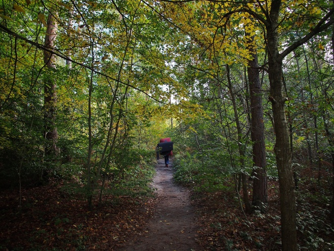 Entering the forest (Autumn 2015)