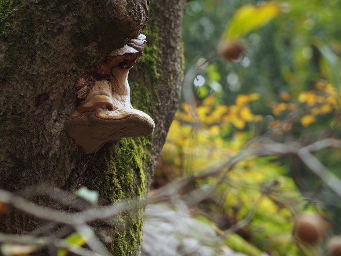 A detail on a tree in Cuvier (Autumn 2016)