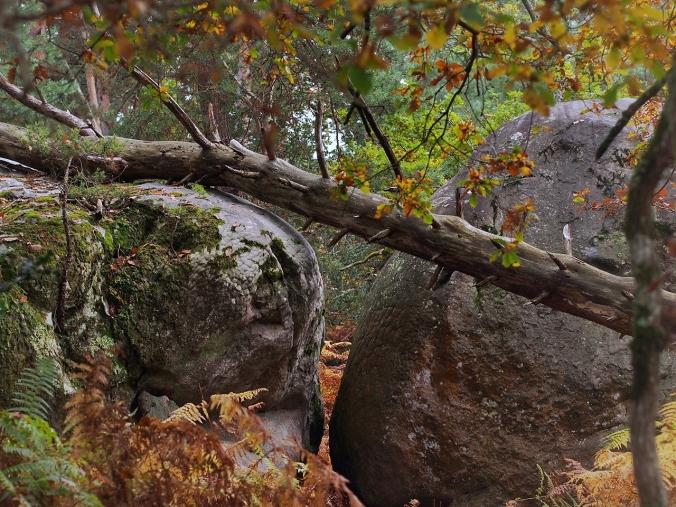 Fallen tree in Cuvier Rempart (Autumn 2016)