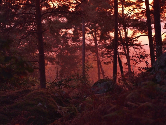 Sunset in Cuvier Rempart, Fontainebleau
