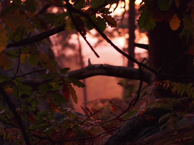 Leaves in sunset in Cuvier Rempart, Fontainebleau