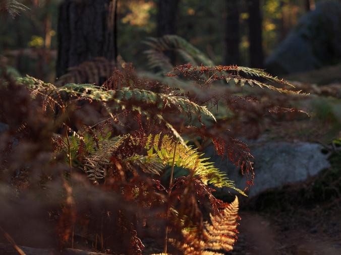 Undergrowth in Isatis (Autumn 2016)