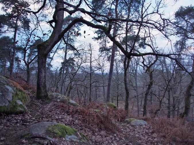 Trees in Rocher de Bouligny (Spring 2016)