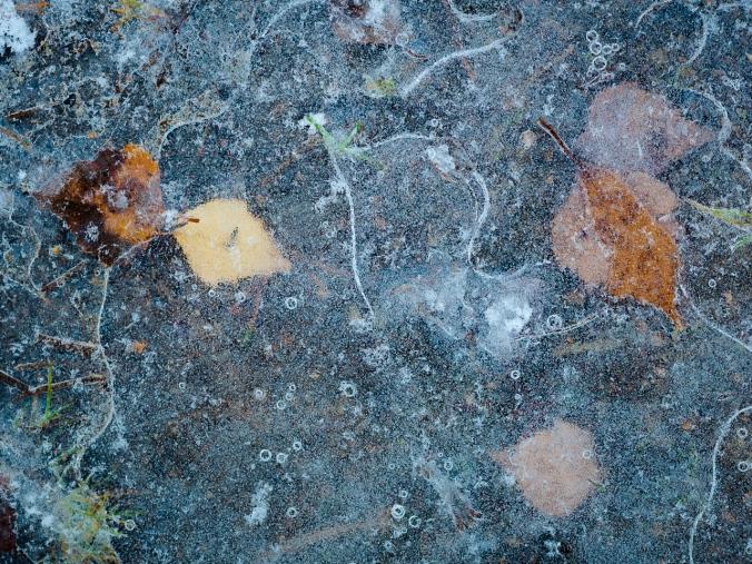 Veteen jäätyneitä lehtiä (Luohua)