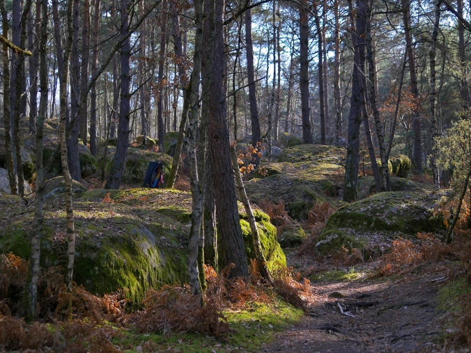 Fontainebleaun metsä keväällä 2017